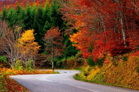 Autumn Forest Road - forest, fall, autumn, leaves, nature, road, trees
