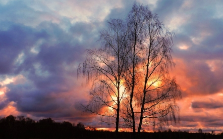 November Sunset in Latvia - sky, sunset, birches, Latvia, clouds, trees