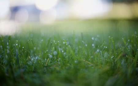 Grass - grass, macro, photography, green, up close