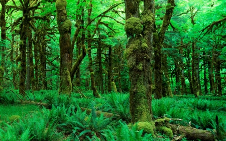 amazing forest - moss, forest, tree, fern