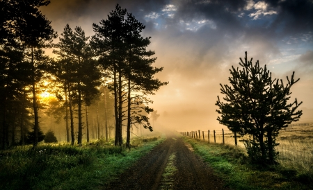 Country Road - flora, sunrise, field, trees, Country Road, fields, road, country