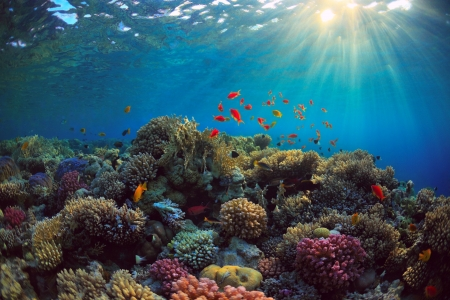 Underwater Corals and Sealife - Sea, Fish, Nature, Oceans, Coral Reefs