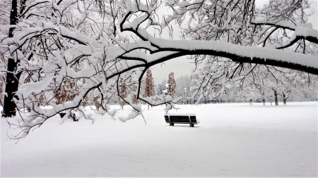 Bench in Snowy Winter Park