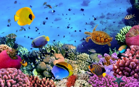 Healthy coral reef - fish, healthy, pretty, ocean, ecosystems, corals, reef