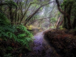 Misty Path in Tropical Forest