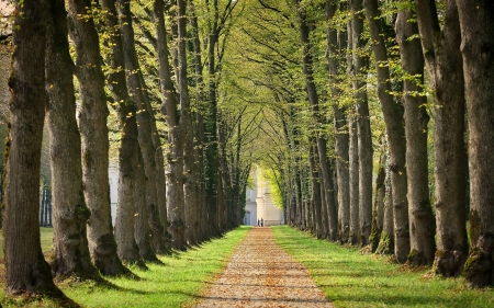 Tree Alley - avenue, tree alley, trees, road
