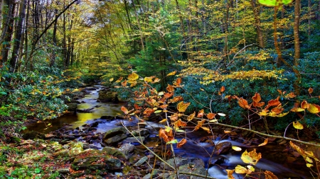 Fall Creek in Autumn - forest, fall, autumn, stone, nature, creek, trees