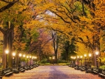 Central-Park-in-Autumn
