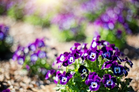 Purple flowers - Flowers, Nature, Nayure, Purple, Beautiful