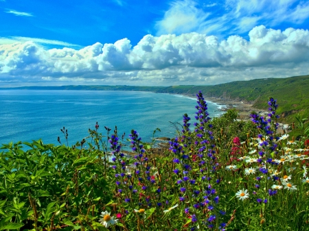 Whitsand Bay,England - cornwall, flowers, nature, clouds, bay, coast