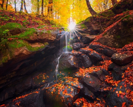 Forest Fall - forest, rocks, fall, sun, waterfall, nature, trees