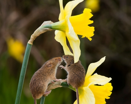 Field Mice Flowers - Flowers Healthy