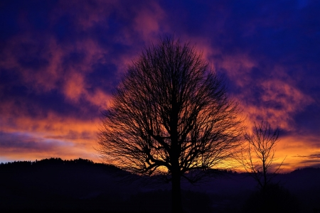 Tree Silhouette in Sunset - tree, cloud, sunset, sky, Nature