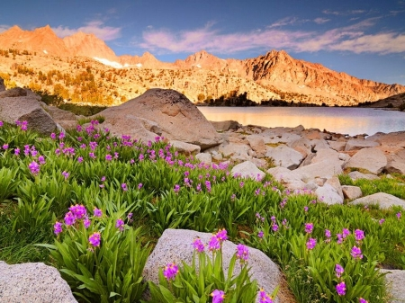 Lake Mountain - flowers, stone, peaks, mountain, grass, slope, summer, lake, reflection, nature
