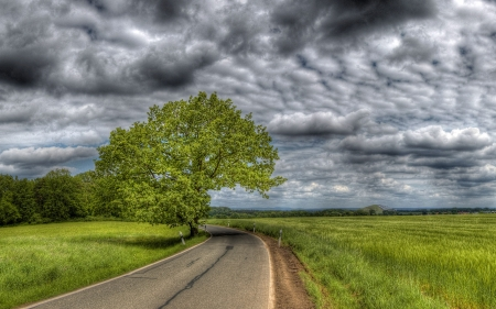 Country Road - tree, country, road, clouds