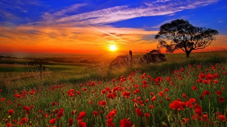 Sunset Over the Poppies Field - glow, poppies, sunset, sky, clouds, sundown, summer, nature, meadow