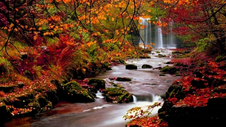 Waterfall in Autumn - beauty, water, vibrant, creek, waterfall, Autumn, nature, Fall