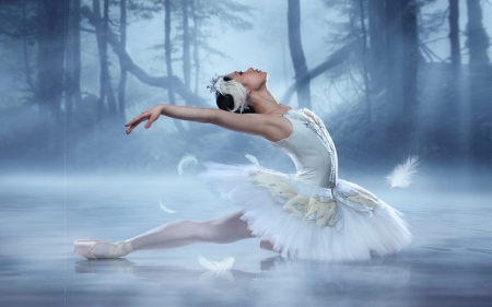 Beautiful Swan Ballerina Other People Background Wallpapers On Desktop Nexus Image 2332312