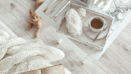 December - tea, photography, winter, cat, white