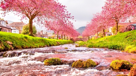 CHERRY BLOSSOMS - blooming, water, rocks, flowers, sakura, cherry bloosoms, nature
