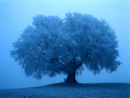 The tree at the winter - amazing, tree, snow, winter