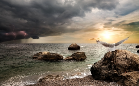 Sea Sunset - rocks, sea, horizon, clouds, bird, stones, sunset, seagull, lightning, shore, nature