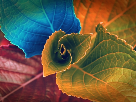 LEAVES - VEINS, PLANT, COLORS, NATURE