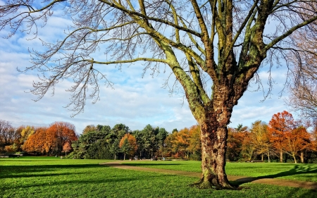 Autumn Landscape - landscape, autumn, nature, tree