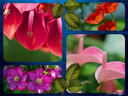 FLOWERS COLLAGE - COLLAGE, FLOWERS, IMAGE, PRETTY