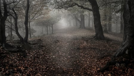 Forest - landscape, leaves, path, Forest, trees, nature