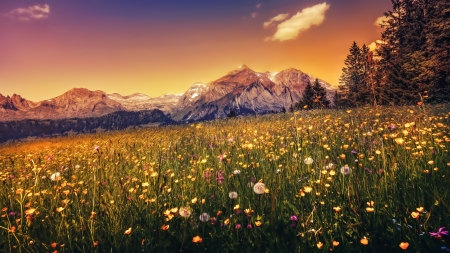 Beautiful Sunset - flowers, nature, mountain, sunset