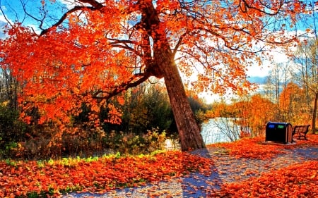 PARK at AUTUMN - colorful, autumn, enchanting nature, park, sky, seasons, pond, leaves, water, splendor, nature, branches, landscape, falls
