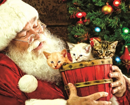 A Barrel of Fun - santa, cats, xmas, claus