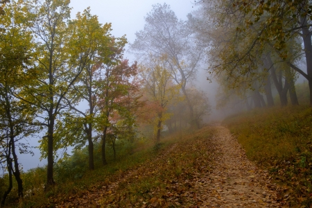 Foggy - amazing, fog, nature, autumn