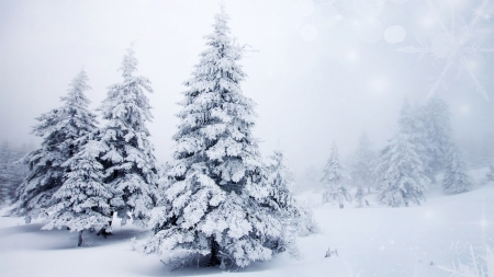 Looks Like Christmas - Christmas, forest, holiday, snow, trees, winter