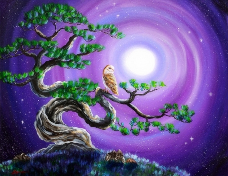 Owl in Twisted Pine Tree - owl, moons, draw and paint, love four seasons, attractions in dreams, pine tree, paintings, nature, animals