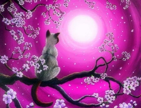 Morning Sakura - sakura, draw and paint, love four seasons, spring, attractions in dreams, cat, paintings, nature, animals