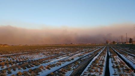 Thomas Fire, Ventura County, California - Ventura, California, Strawberry, Field, Smoke, Sky, Fire