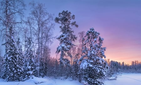 Enchanting Winter Forest Twilight
