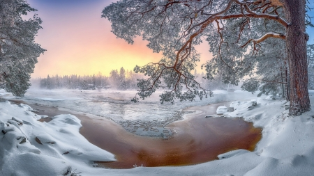 Colors of the winter - tree, snow, lake, winter