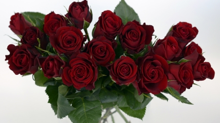 Lovely Roses - red, for you, rose, love