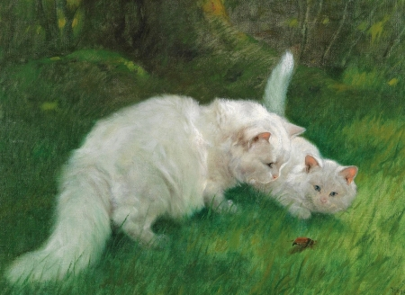 Curious - art, luminos, grass, cat, animal, arthur heyer, painting, summer, white, pictura, couple, pisica