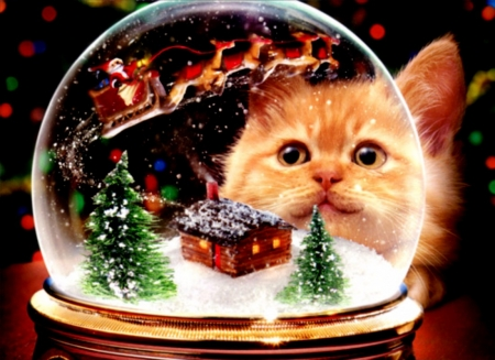 Kitten Snow Globe Christmas