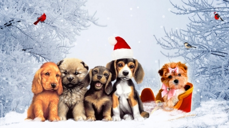 Puppies and Birds Winter - Christmas, New Years, holiday, birds, finch, canine, winter, puppies, snow, 2018 Year of the Dog, pup, Firefox Persona theme, dogs