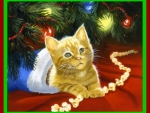 Yellow Kitten in Stocking