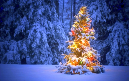 Chirstmas Tree - Christmas, holidays, Christmas Tree, love four seasons, attractions in dreams, xmas and new year, winter, snow, winter holidays, nature, forests