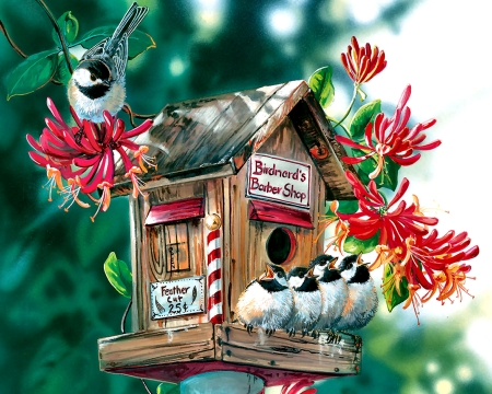 birdnard s barber shop bird birds animals background