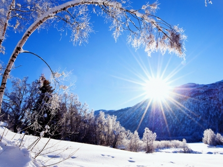 A Bright Winter Sun - snow, sun, winter, Nature, trees, mountain, bright