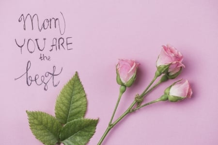 Happy Mother's Day! - green, rose, flower, day, mother, pink, word, card