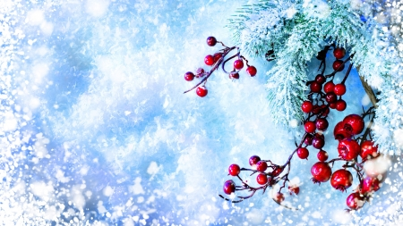Winter Berries - evergreen, holly, winter, snow, berries, ice, Firefox Persona theme, blue, frost, spruce